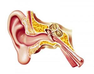 Ear - Audiology - Annapolis - Columbia - Glen Burnie - Kent Island - Laurel - Odenton, MD